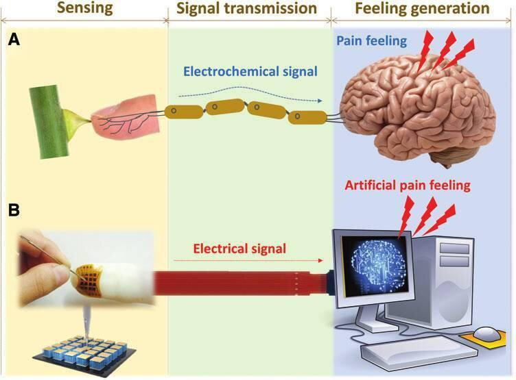 ساخت پوست الکترونیکی حساس به درد و دما