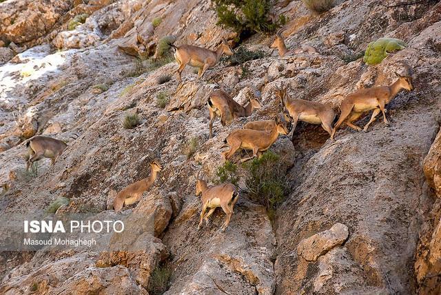 ورود تورهای گردشگری به مناطق حفاظت شده به مجوز محیط زیست احتیاج دارد