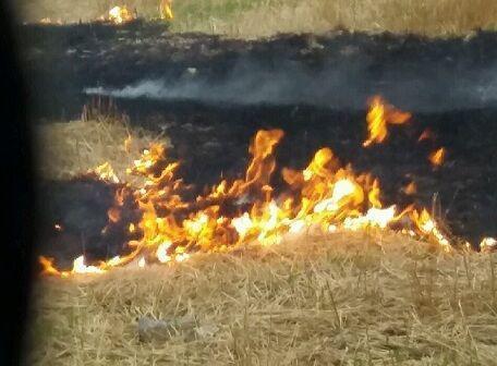 خبرنگاران عامل آتش سوزی عمدی میانکاله در مازندران شناسایی شد