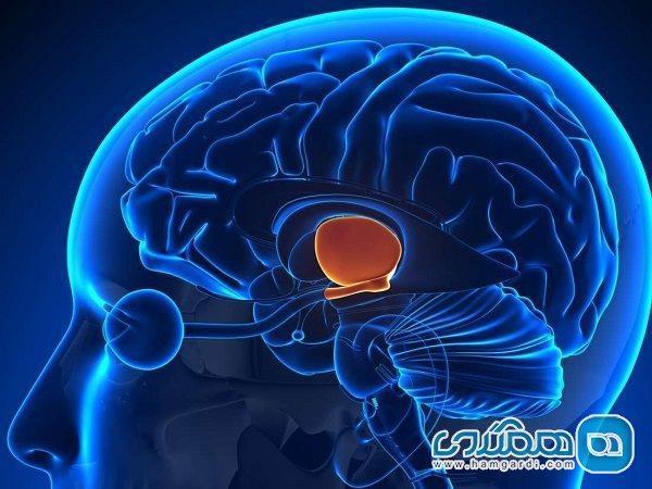 ویروس کرونا به وسیله سیستم ایمنی بر مغز تاثیر می گذارد