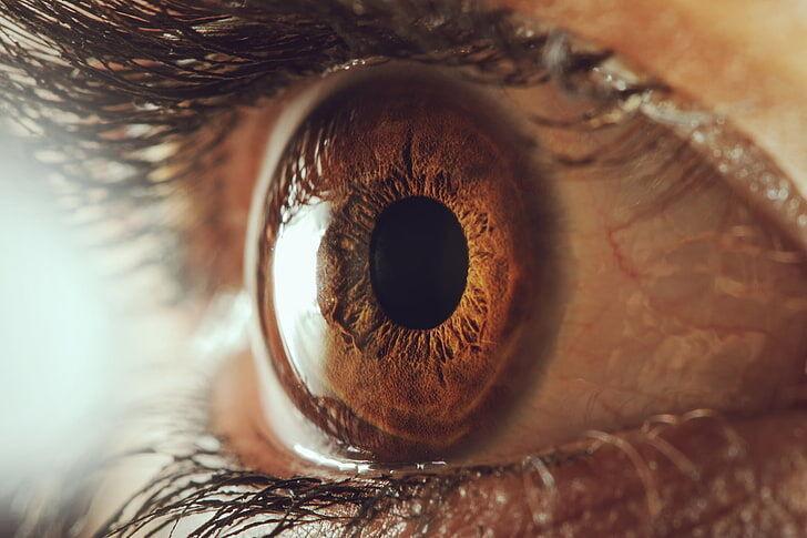 چشم به مغز چه پیغام هایی می فرستد؟