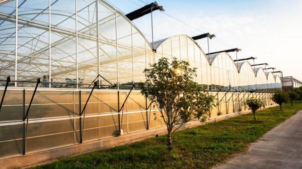 ساخت گلخانه ؛ آشنایی با مراحل، پیش نیازها، اصول و مقرارت