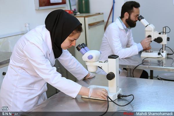 آنالیز طرح سنتز نانوکاتالیست های مرتبط با آلودگی هوا به همت پژوهشگران اسفراینی خبرنگاران